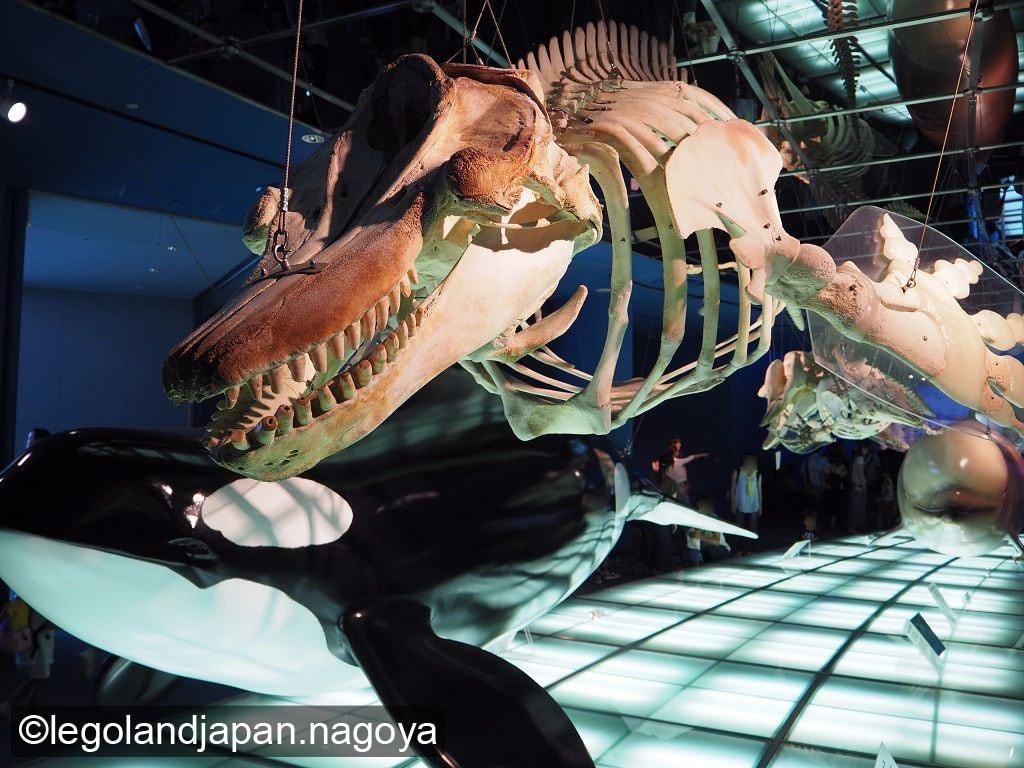 nagoya-aquarium-10