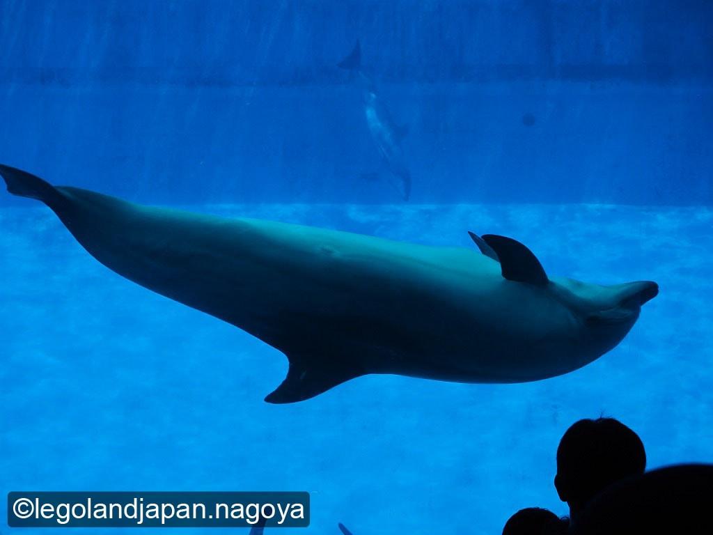 nagoya-aquarium-11