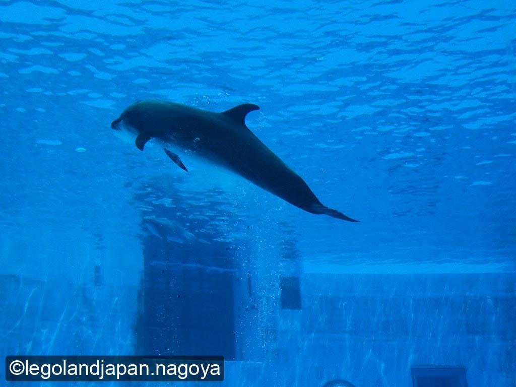 nagoya-aquarium-12