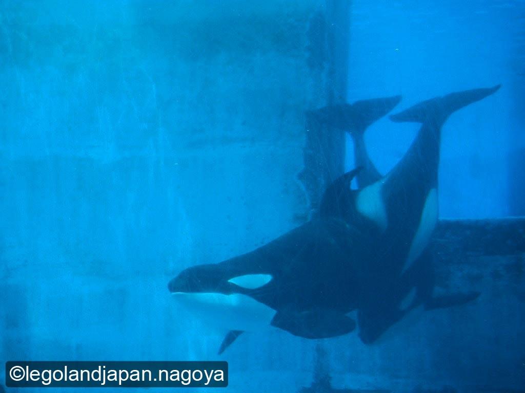 nagoya-aquarium-2