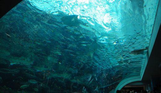 名古屋港水族館を観光!見どころを徹底紹介します!