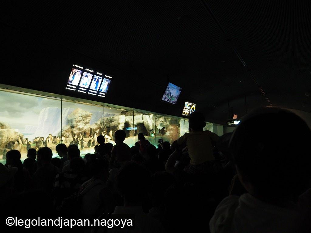 nagoya-aquarium-40