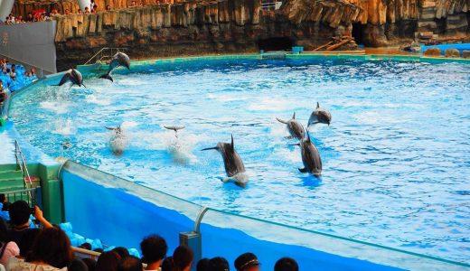 イルカが宙を舞う!名古屋水族館でイルカパフォーマンスを見てきた!