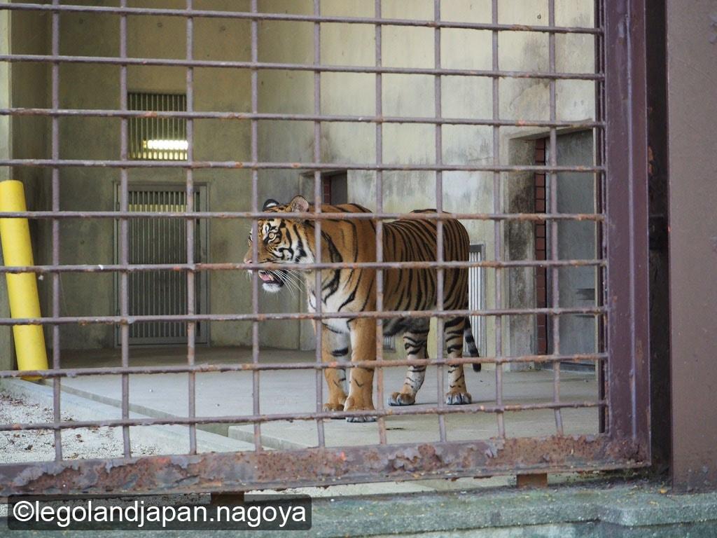 higashiyama-zoo-25