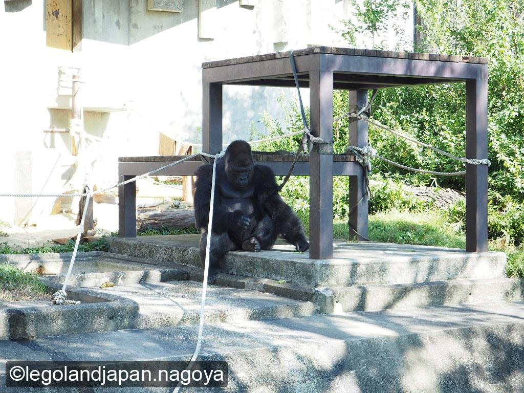 higashiyama-zoo-26