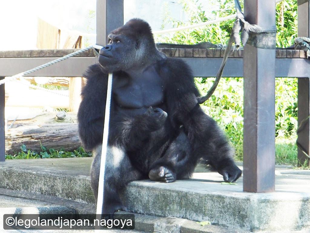 higashiyama-zoo-shabani-1