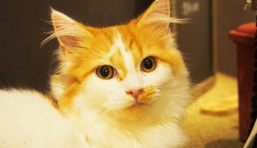 猫カフェMoCHA(モカ)が名古屋栄にオープン!猫との触れ合いは至福のひと時