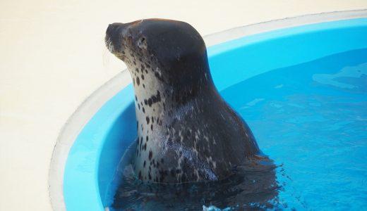 【名古屋港水族館】アザラシがいる「ごまちゃんデッキ」に癒される