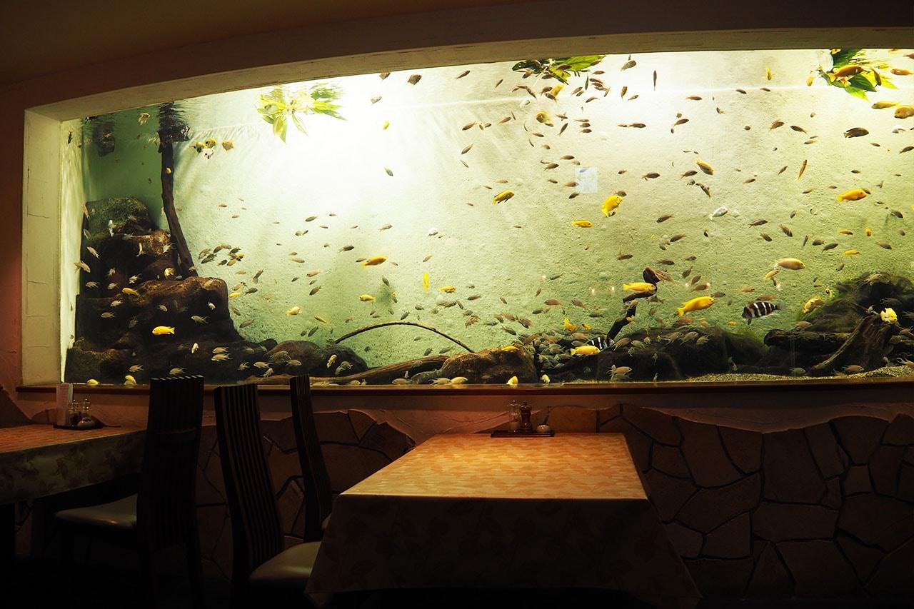 名古屋港水族館 ランチ