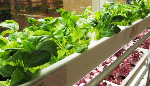 グローバルゲート「GREEN SQUARE」に場所を借りて野菜栽培!