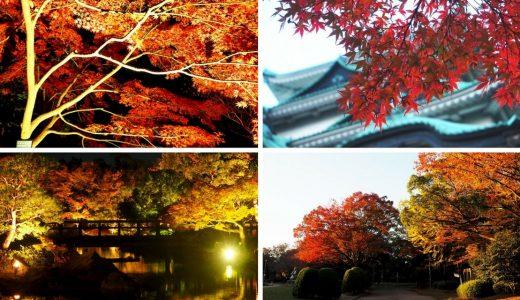 名古屋の紅葉スポットまとめ。ライトアップや穴場の名所をご紹介!