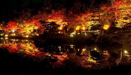 秋の東山動植物園ライトアップ! 美しい紅葉を見に行こう!