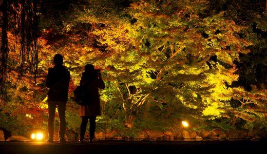徳川園の秋を彩る紅葉とライトアップ。見惚れるほどの美しさに感動!