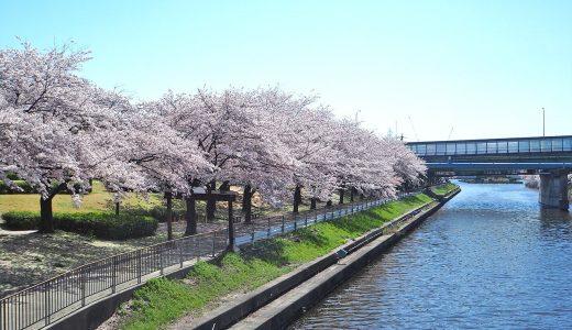 荒子川公園でお花見。桜舞い散る川沿いをフォトウォーク。