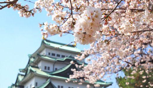 名古屋城でお花見。天守閣をバックに桜の写真を撮ろう!