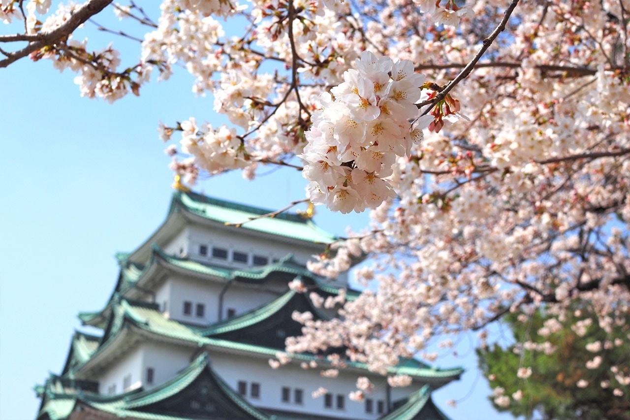 名古屋城でお花見
