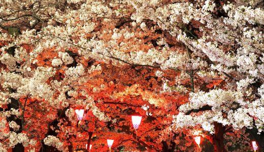 鶴舞公園でお花見。桜とライトアップに酔いしれて