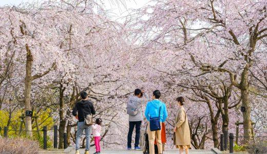 東山動植物園「桜の回廊」でお花見