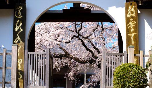 香積院のしだれ桜が見頃を迎えています。