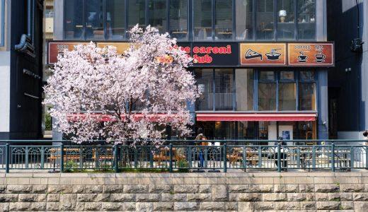 納屋橋近くの桜。写真を撮りに堀川沿いへ。
