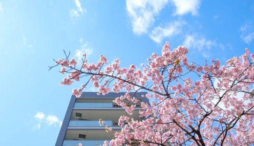 高岳駅近くの桜。オオカンザクラの並木道へ。