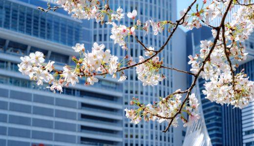 都会に咲く桜。名古屋駅エリアで桜めぐり。