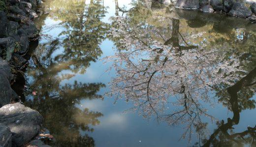中村公園の桜。無料の美しい庭園でお花見
