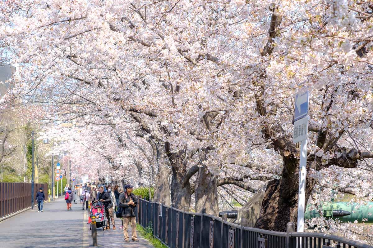 山崎川沿いを散歩