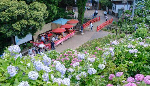 形原温泉あじさいの里「あじさい祭り」を観光!【2019】