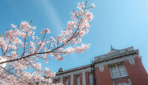 【桜景色】名古屋市市政資料館